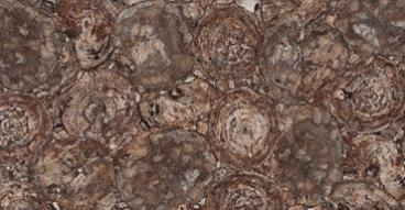 אבן קיסר 8330